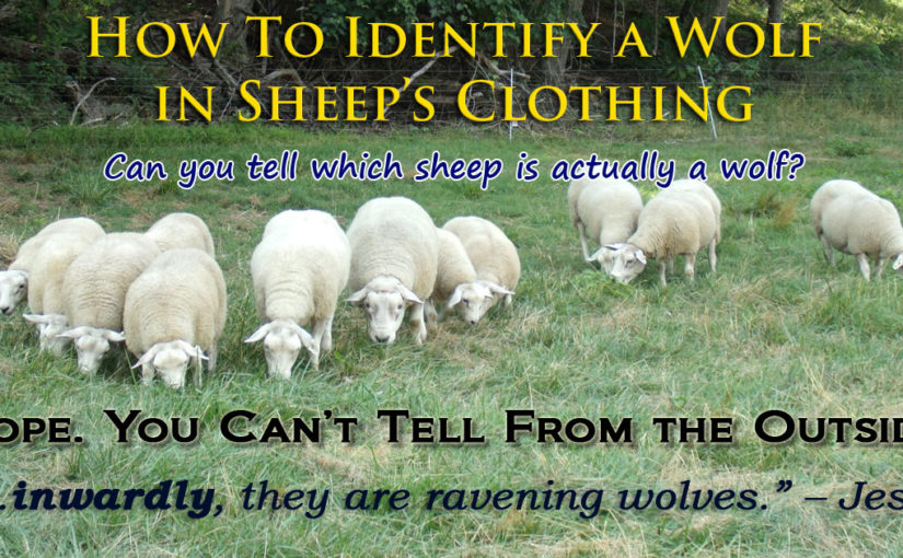 How to Identify a Wolf in Sheep's Clothing