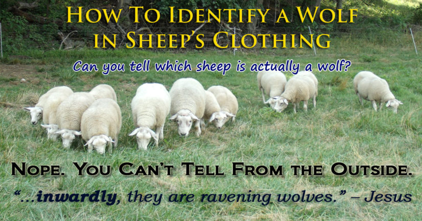 How To Identify A Wolf In Sheeps Clothing