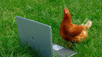 Hen with a laptop